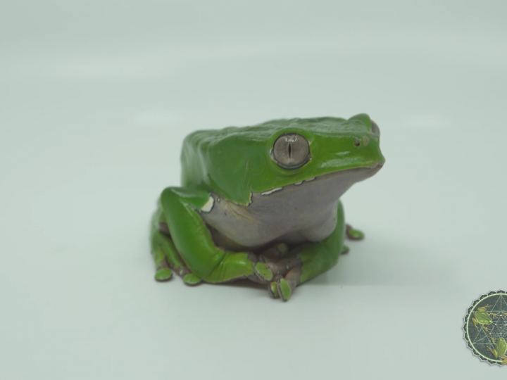 Protect the Kambo Frog || Fundraising Video